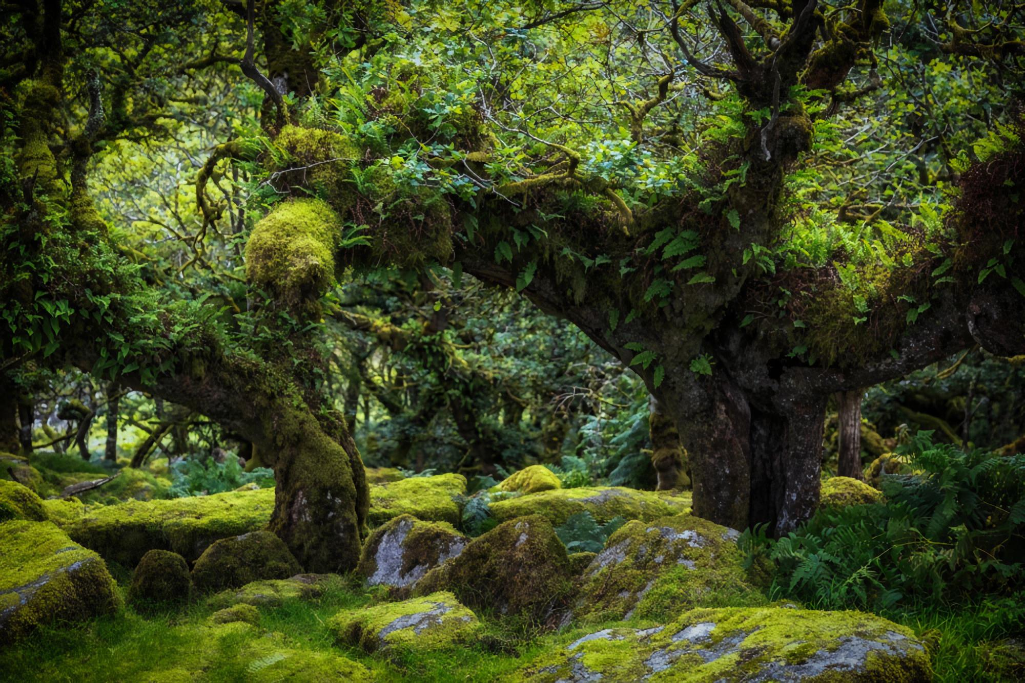 wistmans forest uk