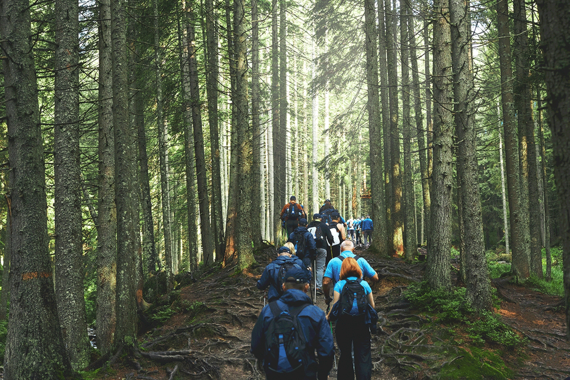 group hiking in forest