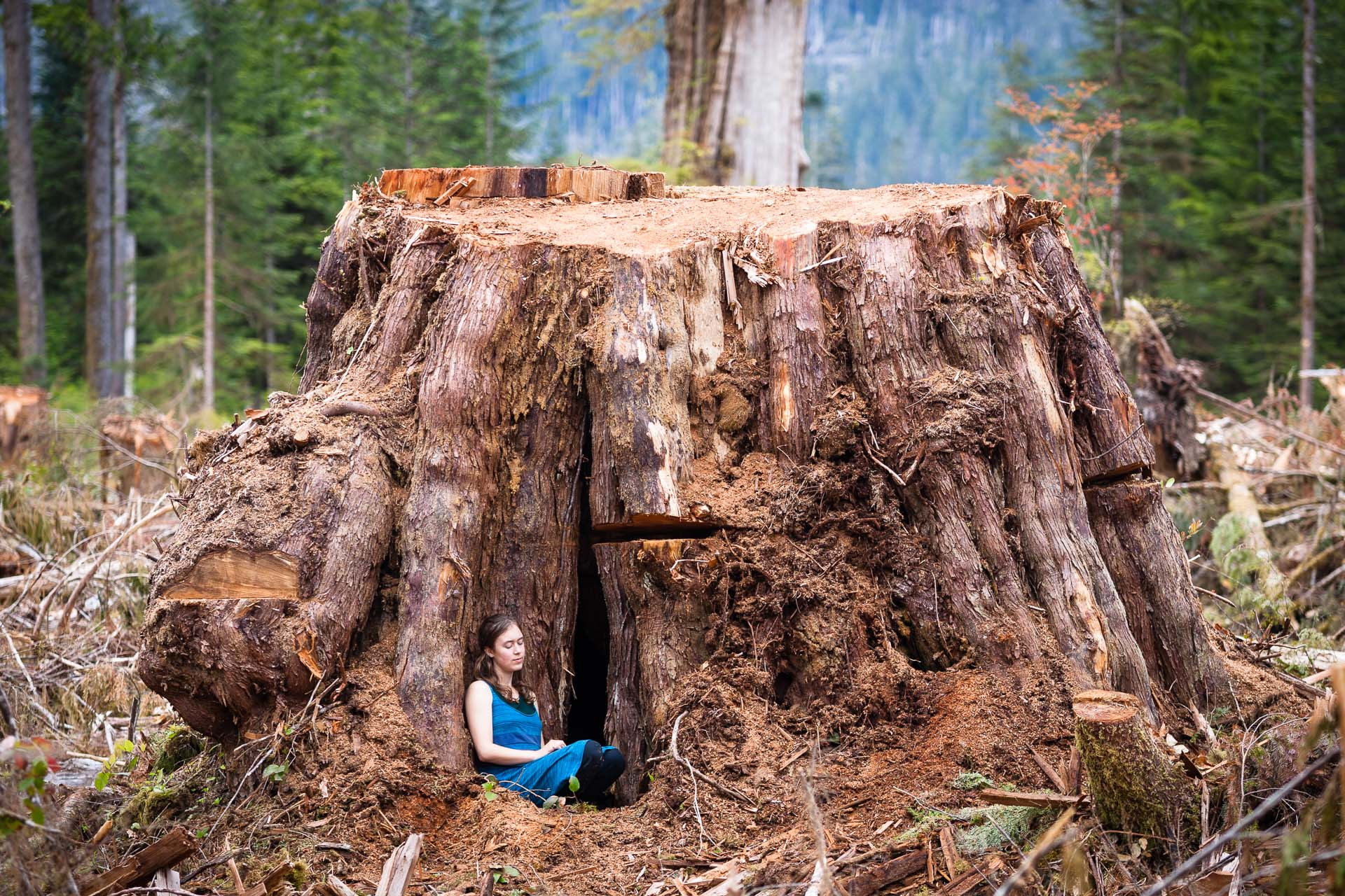 old growth forest logging